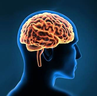 Brain Neuroscience #