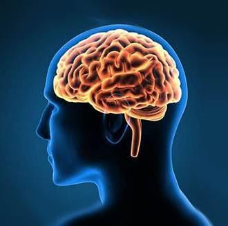 Brain Neuroscience#